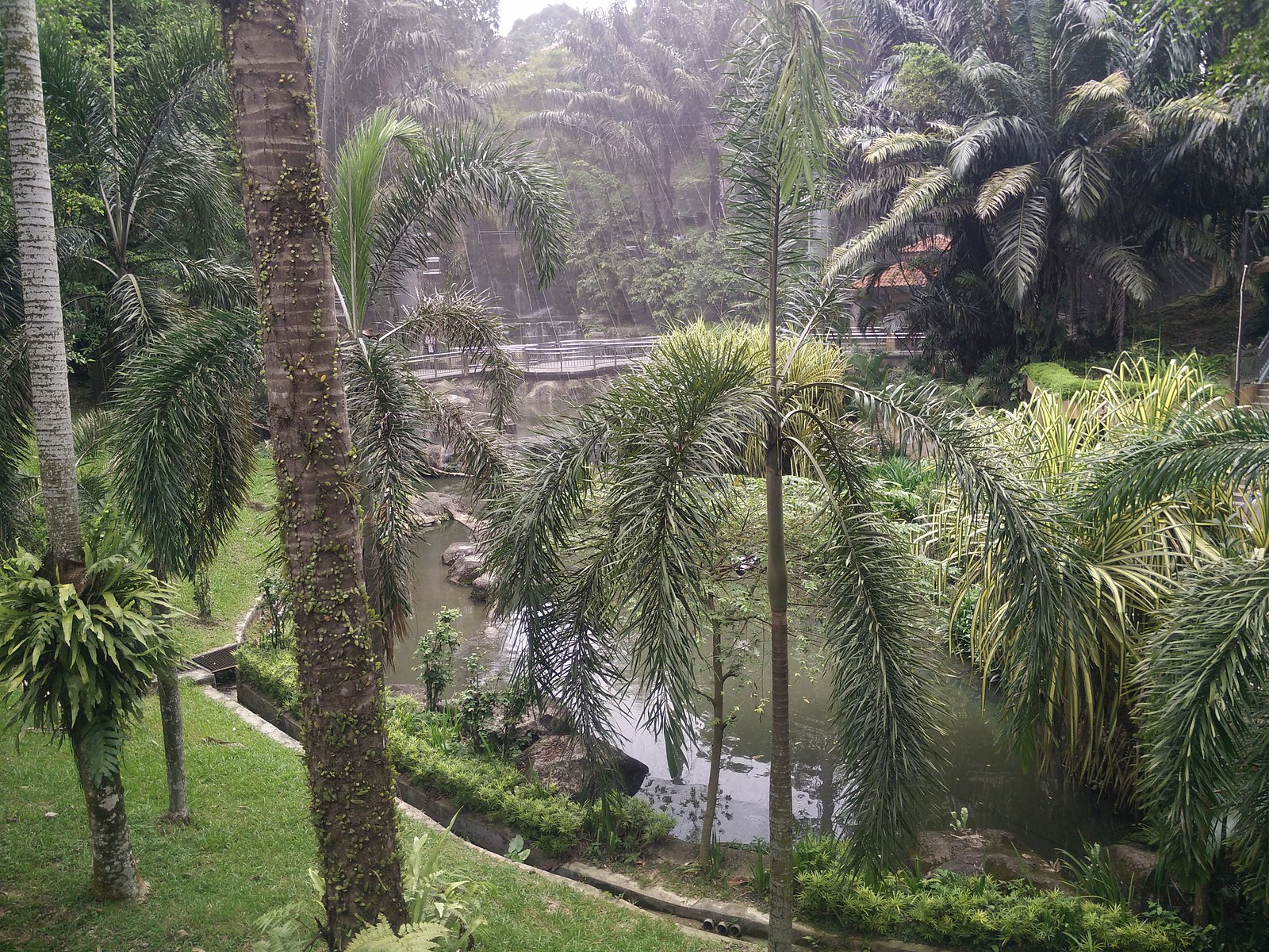 palm trees in park, pond