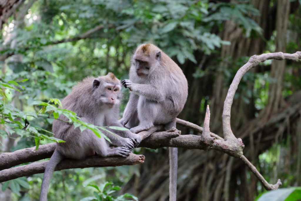 two monkeys on a branch