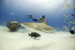 man freediving with reef sharks
