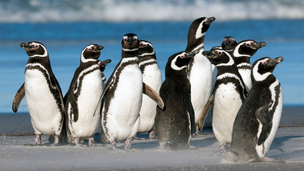 10 black and white penguins standing