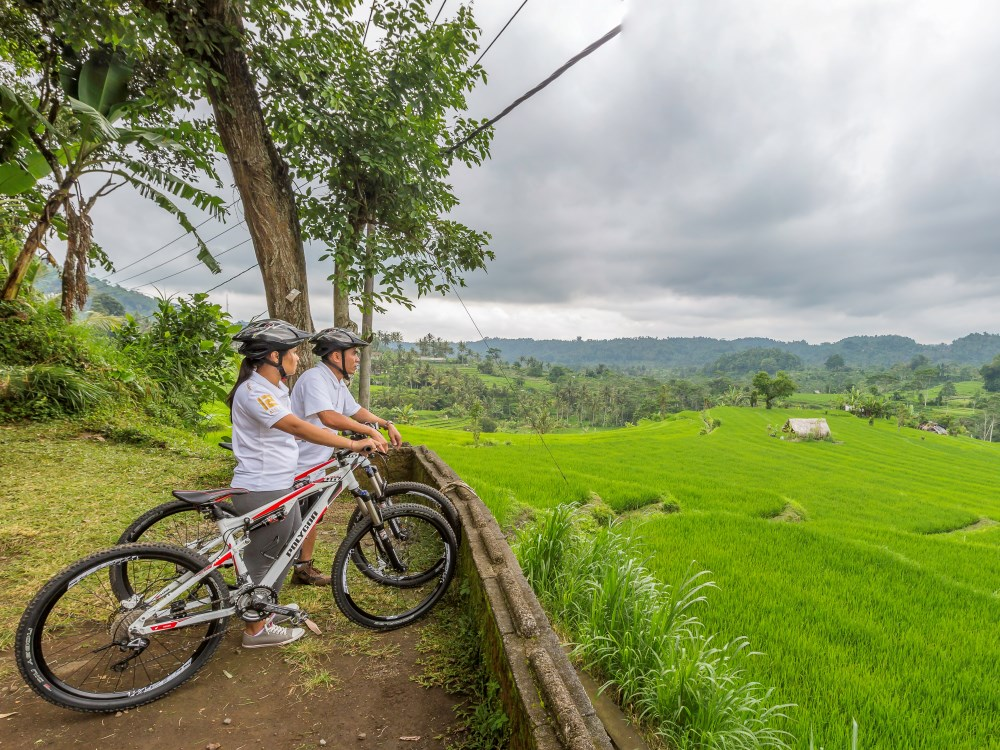 two cyclists looking over green rice paddies