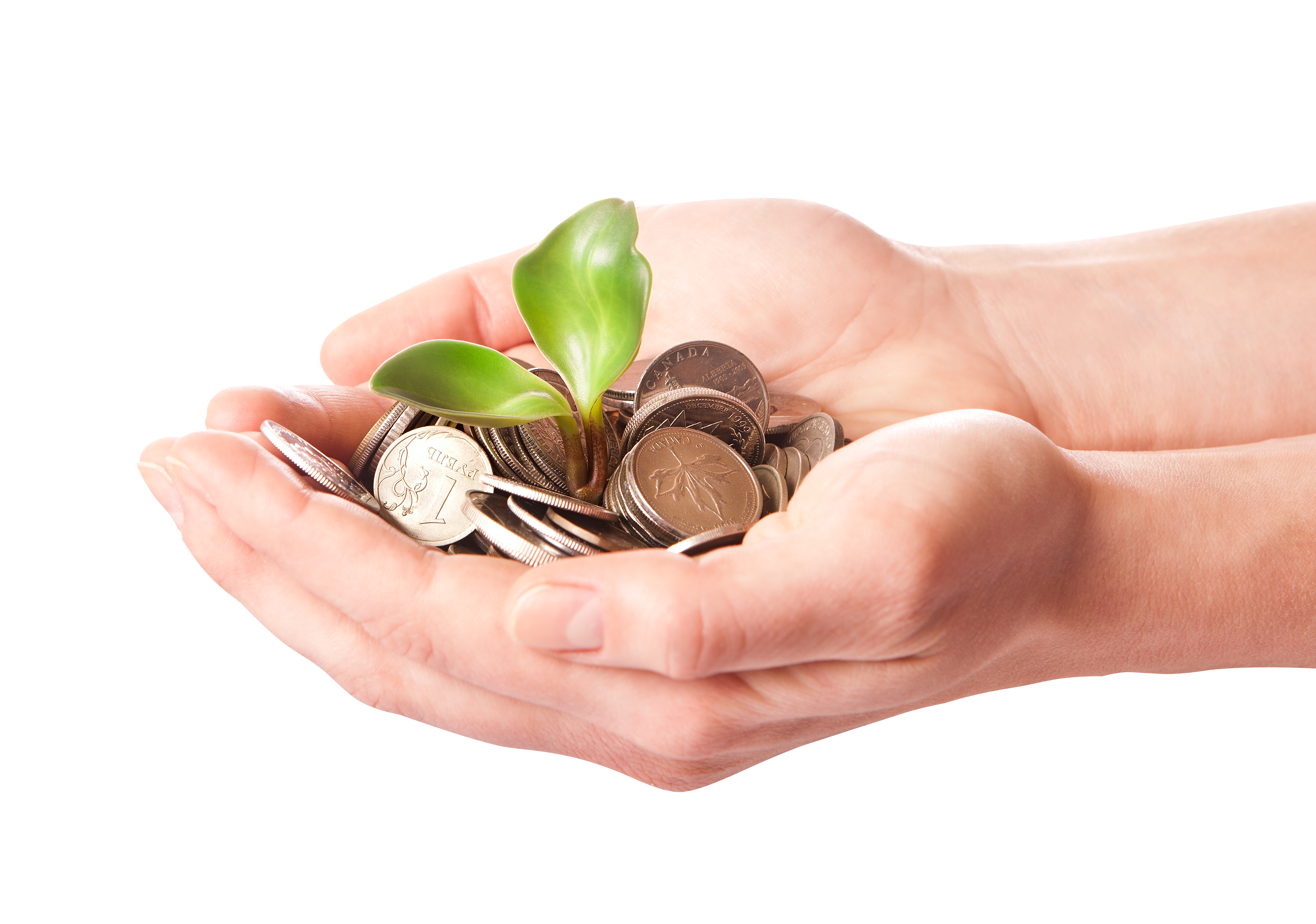 hand holding coins and a plant