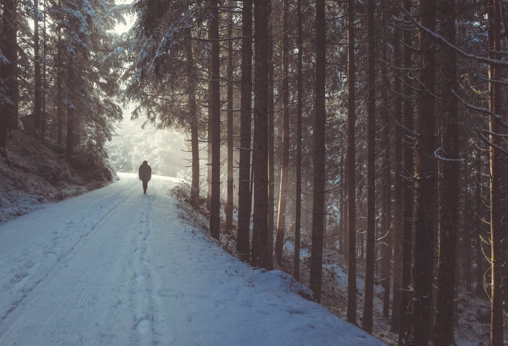 person walking on snow in forest