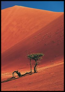 red desert hill, small tree