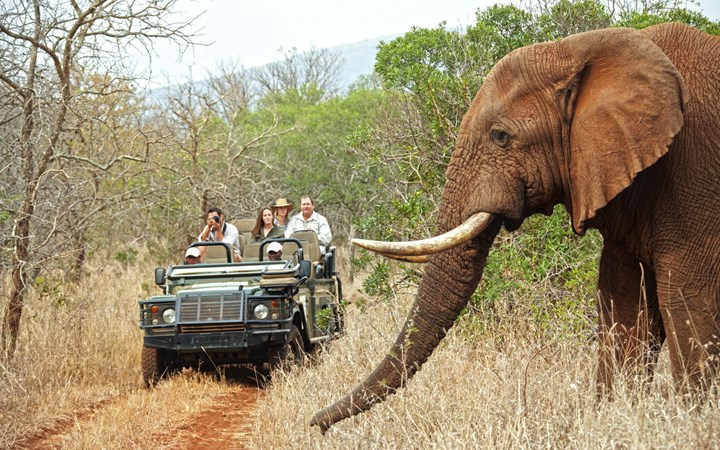 jeep driving next to elephant with big tusks