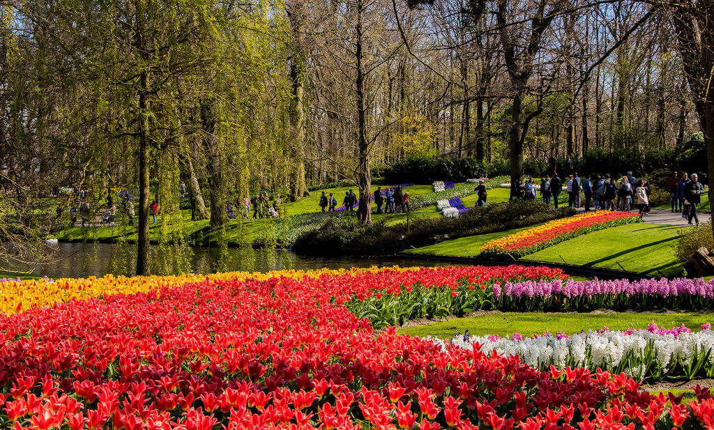 red and yellow tulips in park