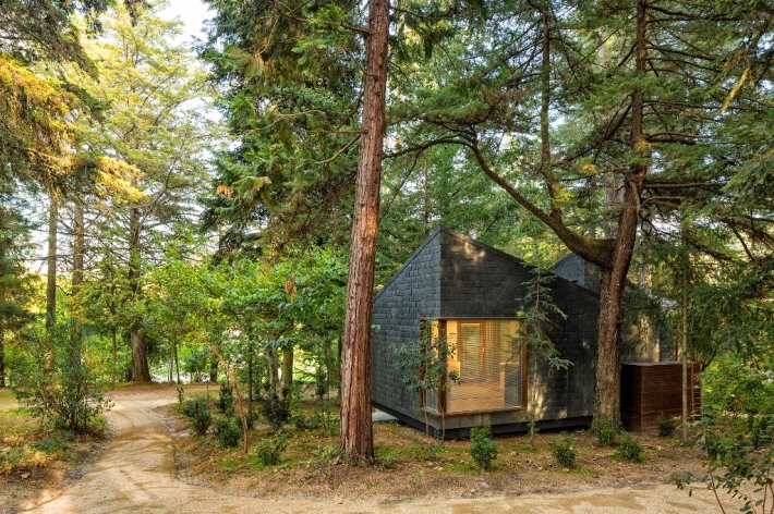 wooden angular forest dwelling